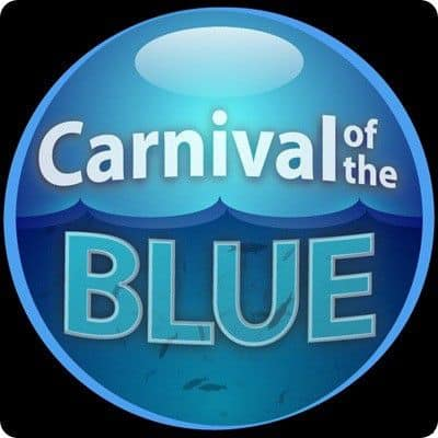 blogcarnival Blog Carnival : What, How and Importance of Blog Carnivals?