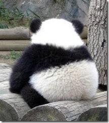 Post panda SEO