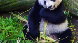 How to Write Content That Google will Love [Panda World]