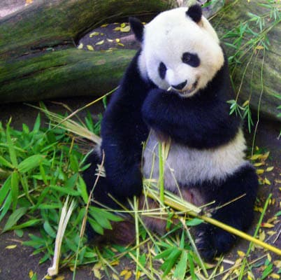 Google Panda Content Writing